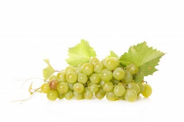 виноград сорту «Білий мускат»