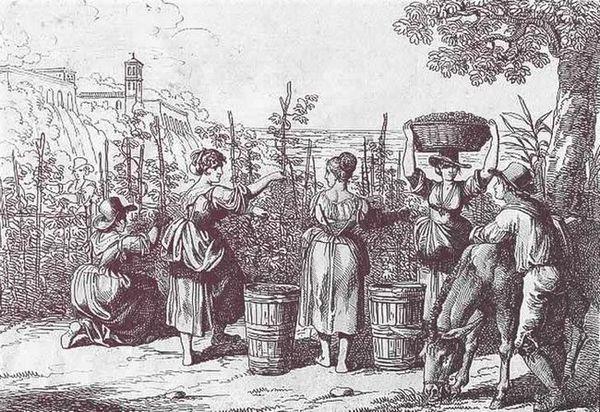 Історія вина: від давнини до наших днів