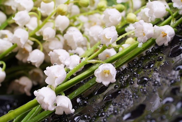fotografie cu flori de crin de vale pentru tinctură