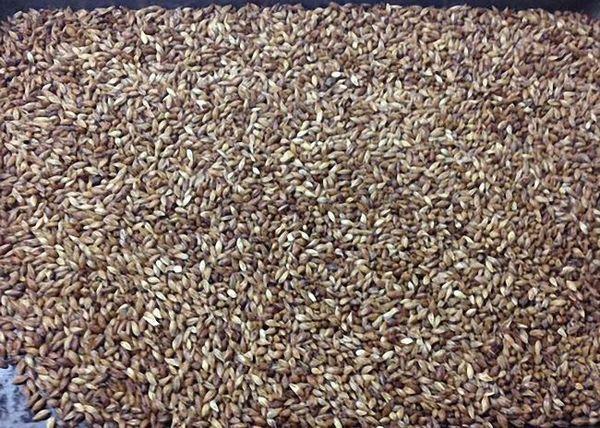 Зерна вівса або ячменю перебрати і добре підсушити