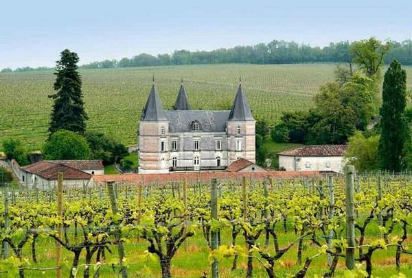 Коньяк Фрапен виготовляється з винограду, вирощеного в найродючіших регіонах Франції на власних виноградниках виробника.