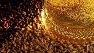 Пшеничні види лаггери