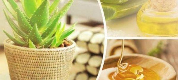 Tinctura terapeutică de aloe, miere și cahors