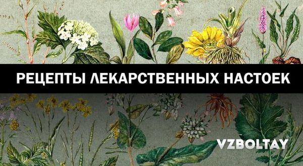 Tincturi medicinale: 9 rețete din plante populare