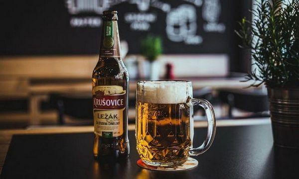 пиво krusovice як подавати