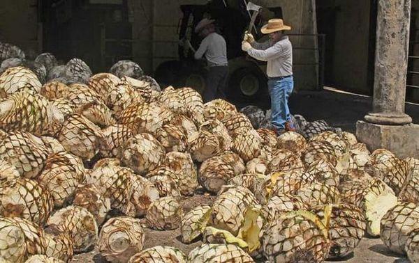 Tequilu lze vyrobit z měsíčního svitu doma