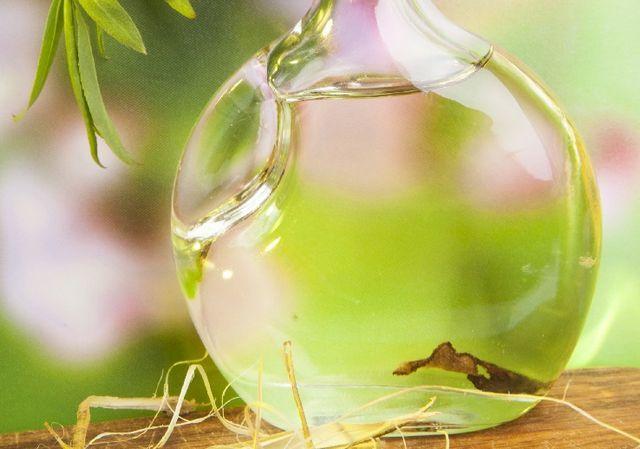 fotografie de tinctură de ceapă indiană pe vodcă