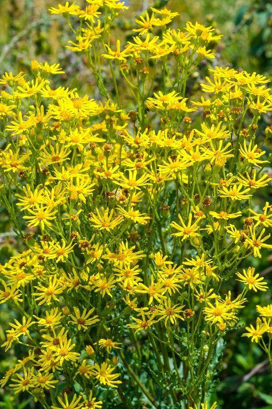 fotografia unei plante sunătoare