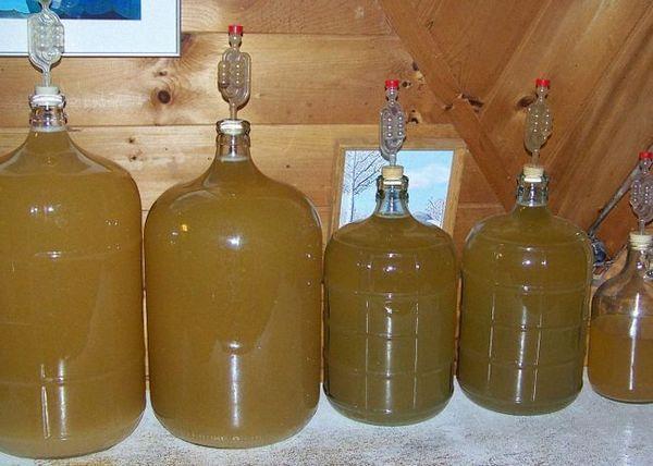 Za fermentacijo dajte domače hruškovo vino