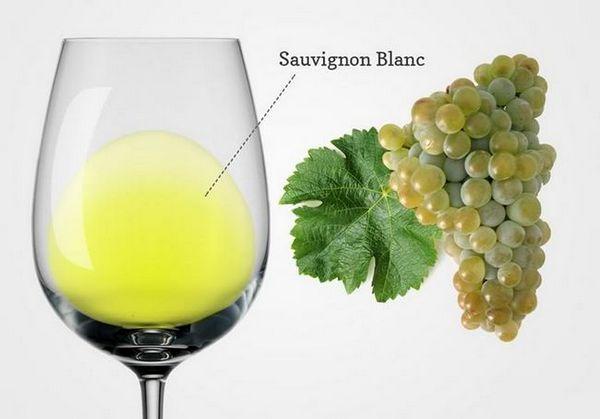 Вино из саувигнона бланц: преглед, растуће регије и нијансе + како се пије