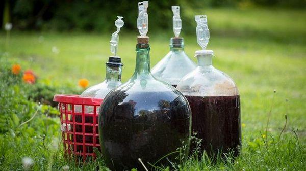 фото бродіння вина з молодих волоських горіхів