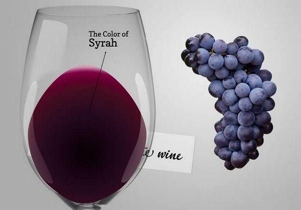 Вино Сирах (Схираз): историја и преглед пића